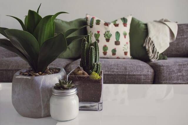 plantas e qualidade de vida