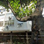 edificio yucatan 493