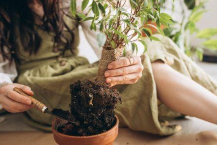 Como aplicar feng shui no jardim