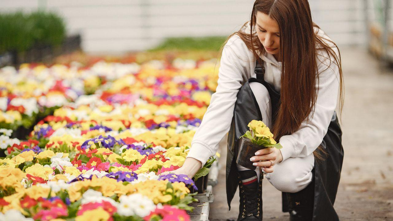 mercado de flores no brasil